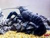 wodny-swiat-setki-ryb-krewetek-i-rakow-na-_45868_2