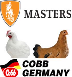 logo20.11